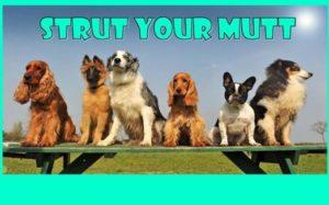 Strut Your Mutt @ Pawtriots Park | Acworth | Georgia | United States