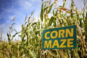Corn Mazes OTP