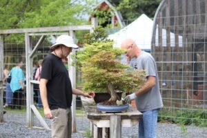 Bonsai Study Group @ Smith-Gilbert Gardens